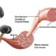 Casein als wertvolles Protein für den menschlichen Körper